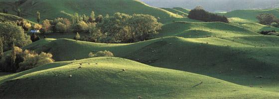 Фотографии Эндриса Эпса. Фермерские угодья в Новой Зеландии