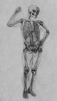 7. Учебное упражнение в анатомическом анализе живой натуры