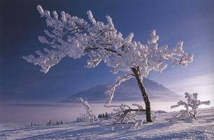 Фотографии Тео Оллофса. Клуэйнский национальный парк, Юкон, Канада