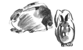 10. Н. Устинов. Наброски кроликов. Кисть, темпера