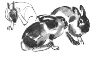 11. Н. Устинов. Наброски кроликов. Кисть, темпера