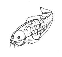 16. П. Павлинов. Схема строения рыбы