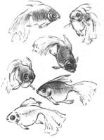 18. А. Барщ. Наброски рыб в аквариуме. Перо, тушь, карандаш