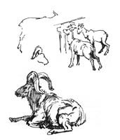 21.Учебные наброски в зоопарке. «Горные козлы». Перо, тушь.