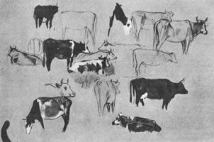 26. Н. Кардовский. Набросок. «Коровы». Кисть, темпера