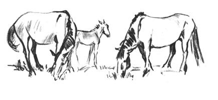 28. Учебный набросок «Лошади». Сангина