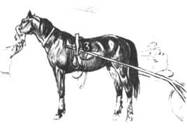 31. Учебная зарисовка «Рысак». Карандаш