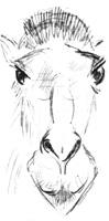 36. В. Мухина. Альбомный набросок «Голова верблюда». Карандаш