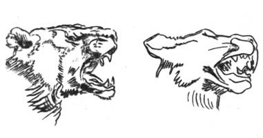 43. Е. Делакруа. Набросок. «Голова львицы». Перо, тушь.