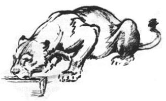 47. А. Лаптев. Набросок. «Львица у поилки». Сангина