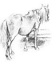 4. А. Лаптев. Старая рабочая лошадь