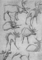 6. Лист с зарисовками (северный олень). Карандаш