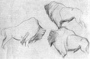 7. Зубр. Набросок карандашем