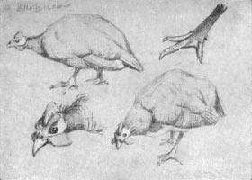 9. Птицы. Зарисовкм карандашом и белилами
