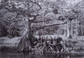 Фотографии Боба Худака. Ручей Рыбный, Флорида, США