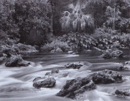 Фотографии Боба Худака. Река Локсхэтчи, Флорида, США