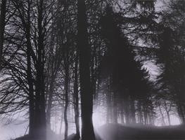 Фотографии Кэтрин Эймс. Лесная мгла. Швейцария. 1994