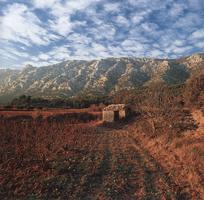 Фотографии Чарлии Уэйта. Гора Сент-Виктуар, департамент Буш-дю-Рон, Южная Франция