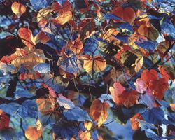 Фотографии Кристофера Беркетта. Сияющие листья