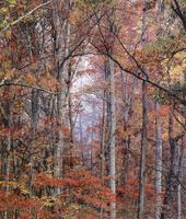 Фотографии Кристофера Беркетта. Лес в пламени красок