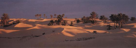 Фотографии Колина Прайора. Оазис Зафран на рассвете. Пустыня Сахара, Тунис