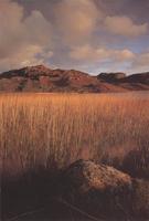 Фотографии Дэвида Уорда. Камыши на озере Долбег (Лох-Долбег). Шотландия