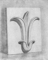 6. Цветок лотоса. Законченый учебный рисунок