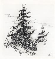 Рисунок 1. Ель а) Набросок. Сангина. Наброски ели.