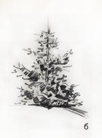Рисунок 1. Ель б) Зарисовка. Карандаш. Наброски ели.