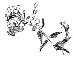 Рисунок 1. Ю. Пименов. Набросок цветка. Перо. Тушь