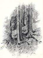 Рисунок 10. Н. Н. Хохряков. Зарисовка карандашом