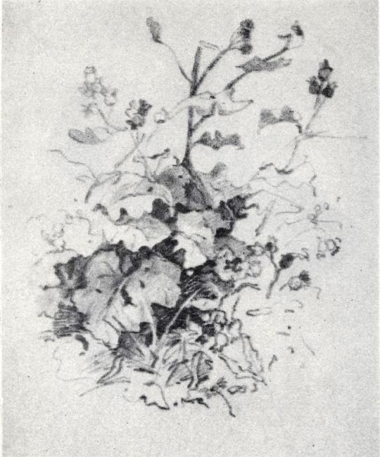 Глина цветы 160