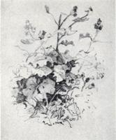 Рисунок 7. Учебная зарисовка карандашом растения для первого плана