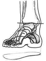1. Схема строения стопы ноги и следок