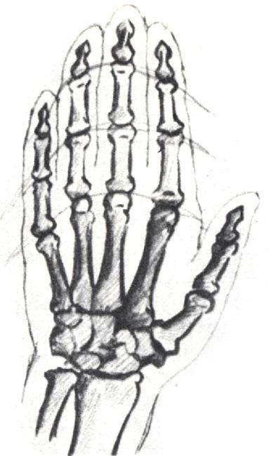 Как нарисовать на своей руке скелет