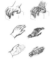 3. Упражнения на построение кисти руки