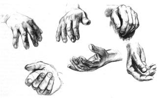 5. Учебные зарисовки кисти руки. Карандаш