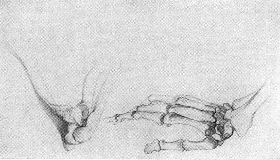 1. Зарисовка скелета локтевого сустава и кисти руки.