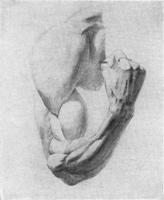 2. Зарисовка мышц руки с гипсового слепка