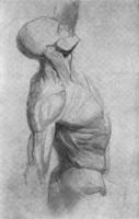 3. Зарисовка мышц торса с гипсового слепка