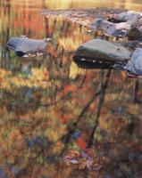 Фотографии Джеймса Рандклева. Отражения в ручье Холли. Урочище Коюгта в лесах Чаттахучи, Джорджия, США