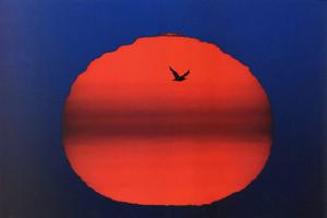Фотографии Джима Бранденбурга. Восход красного солнца