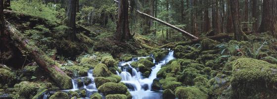Фотографии Джона Шепарда. Неожиданное открытие. Олимпийский национальный парк, Вашингтон, США