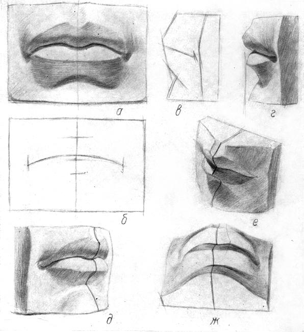 Построение губы поэтапно