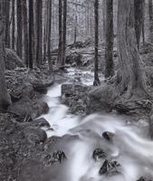 Фотографии Линна Радека. Лесной поток. Национальный парк «Северные каскады», Вашингтон, США. 1982