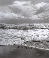 Фотографии Марти Кнаппа. Ржанки. Берег Пойнт-Рейес, Калифорния, США