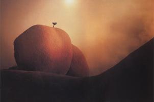 Фотографии Майкла Фатали. В солнечной неге. Юго-Западная пустыня. 1994