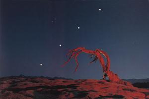 Фотографии Майкла Фрая. Сосна на вершине Сторожевой горы. Иосемитский национальный парк, Калифорния, США