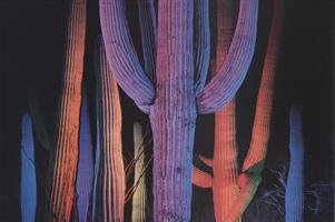 Фотографии Майкла Фрая. Национальный парк «Сагуаро», Аризона, США