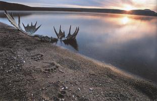 Фотографии Патрика Эндреса. Лосиные рога и медвежьи следы. Бассейн реки Накнек, Аляска, США